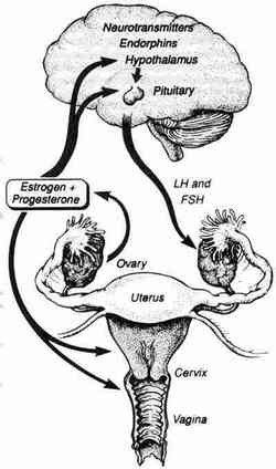how menstruation, ovulation, hormones, periods