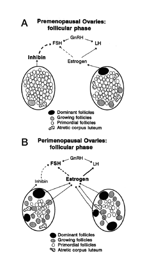 Premenopause / Early Menopause / Primary Ovarian