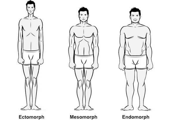 Endomorph, Mesomorph and Eectomorph