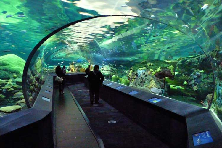 Toronto-Aquarium