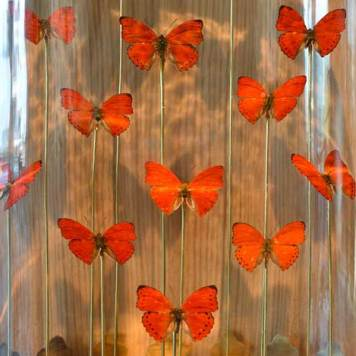 citizenm-cloudm-decor-butterflies