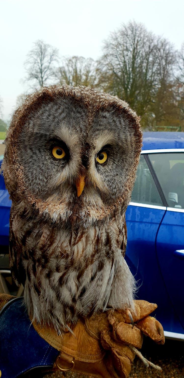 Swinto Estate Owl called Willow