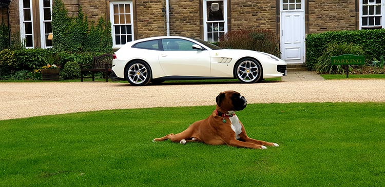 Judges At Kirklevington - North Yorkshire Dog