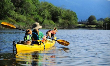 Tips For Canoeing Or Kayaking With Dogs