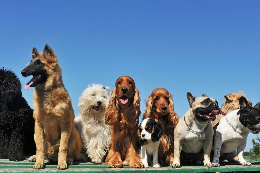 10 Tips for first time Dog Owners