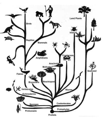 Tree of Life. Humans in a little, upper left. Mammals and the split from reptiles below