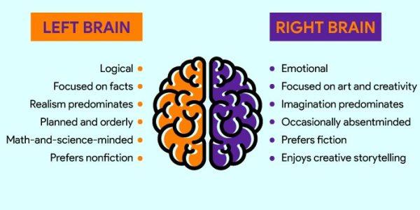 Right brain – Left brain