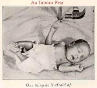 Little Albert 3