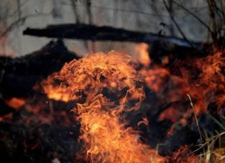 Fogo na amazônia, Bolsonaro e mentiras, um resumo das queimadas