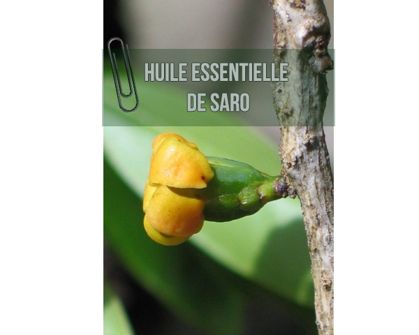 huile essentielle de saro