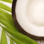 noix coco exotique