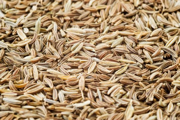 huile essentielle de carvi
