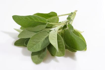 Sauge officinale plante anti-âge