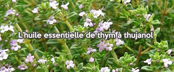 L'huile essentielle de thym à thujanol