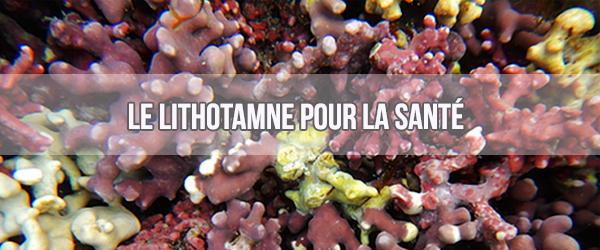 Le lithothamne, l'algue reminéralisante