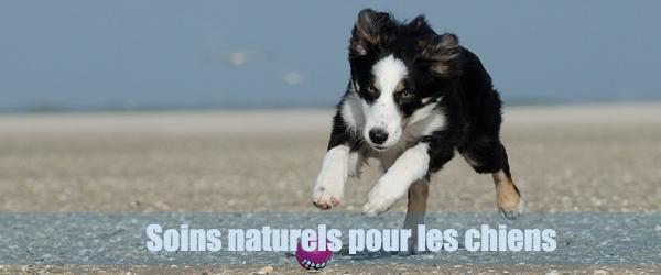 Les huiles essentielles pour les chiens