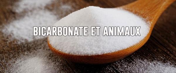 Le bicarbonate de soude pour l'hygiène des animaux domestiques