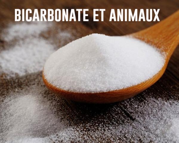 Bicarbonate de soude et animaux