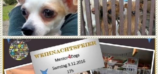 weihnachten-mit-mentor4dogs-2016