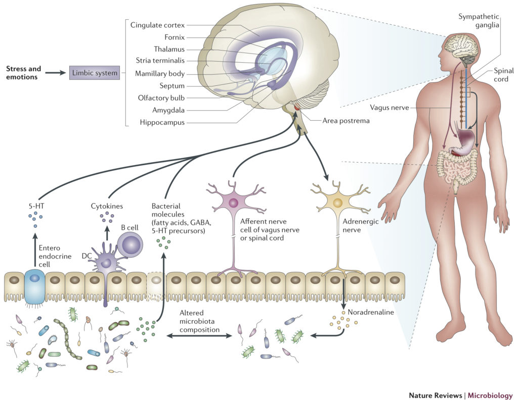 hight resolution of figure 1 the gut brain axis 7 reprinted by permission from macmillan publishers ltd nature reviews microbiology the interplay between the intestinal