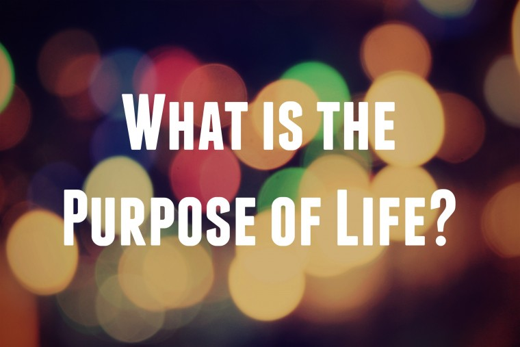 Image result for what is the purpose of life