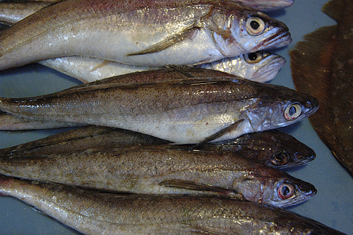 Whiting and Flounder from the Cape Ann Community Supported Fishery. Photo by mogagraham3.