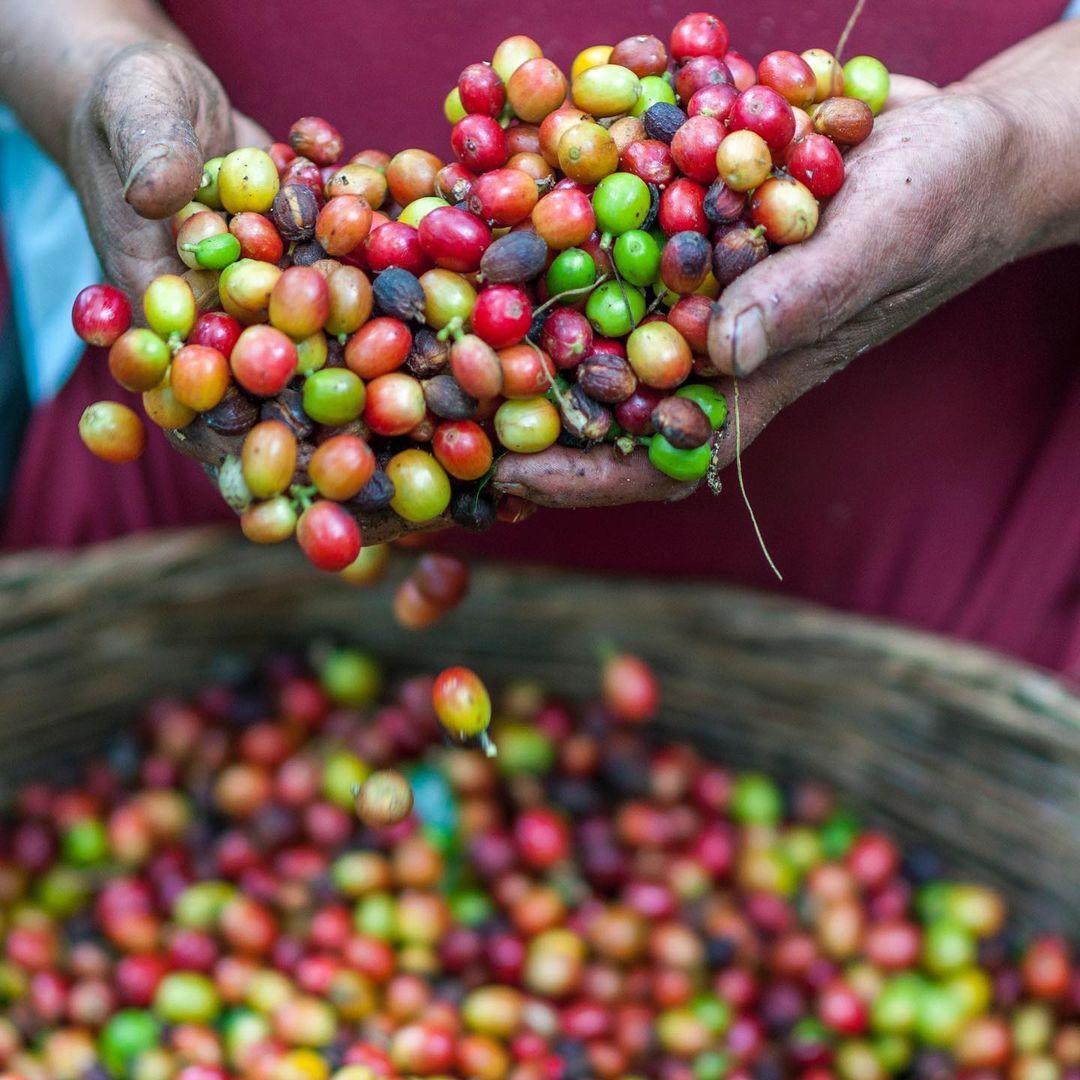 Fairtrade Commerce équitable
