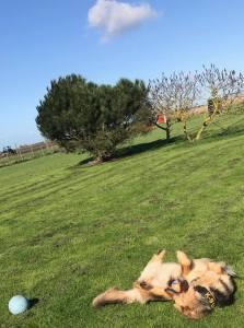 Dog Holiday Exercise