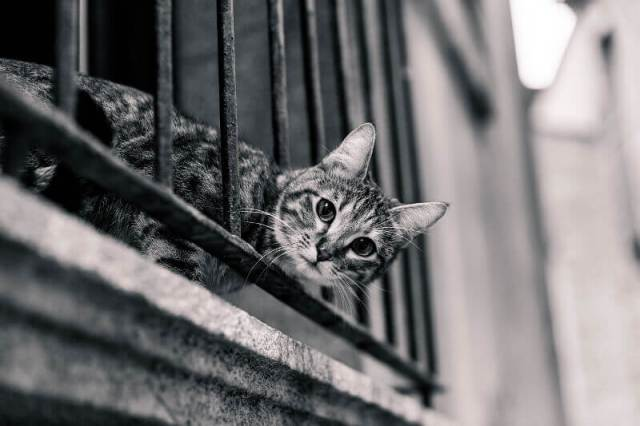 How To Cat Proof A Balcony 4 Solutions To Consider Meows N Paws