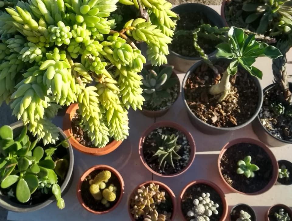 PPJ #004 – Plantas Suculentas
