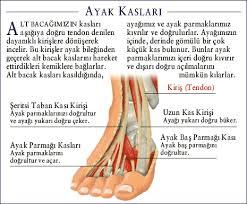 ayak kasları