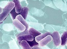 bakteri virus