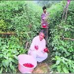 Uttarakhand Farmer shows new ideas