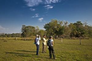 Observação de Animais no Pantanal (Foto: Refúgio Ecológico Caiman)