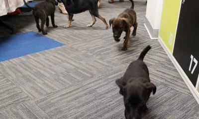 Entel realiza jornada de adopción de mascotas en sus oficinas