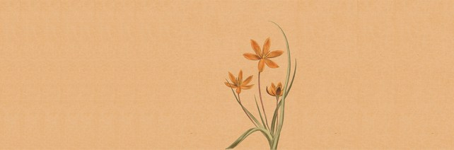 background-1029405_640