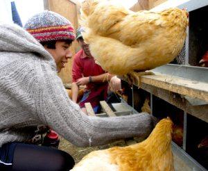 vermont farm chicken