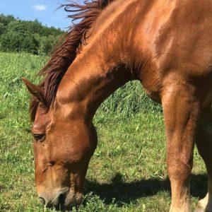 horse vermont