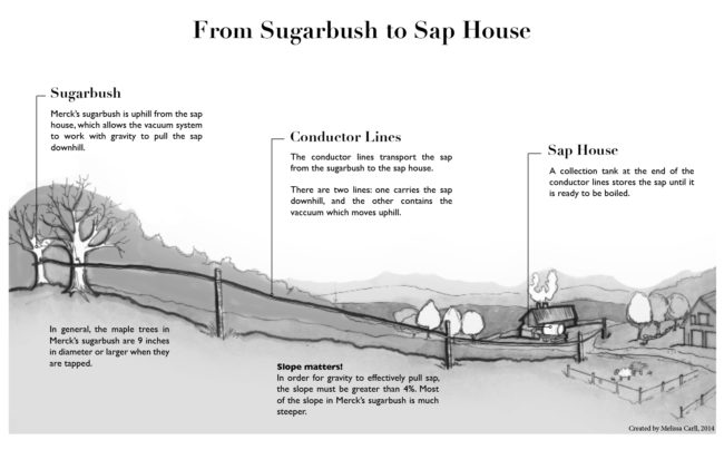 sugar, how it's made, process