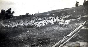 VT farm history