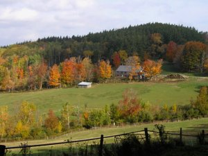 saphouse, autum, fall foliage