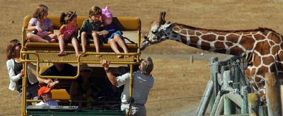 Tour guide Richard Horgan introduces some guests to one of the many giraffes at Safari West as it stretches its long neck to get a closer look in Santa Rosa,Calif., on Tuesday, Aug. 17, 2010. (Susan Tripp Pollard/Staff)