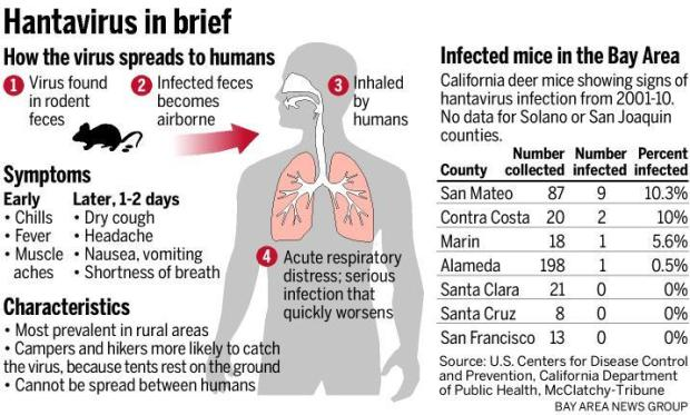 Health experts weigh in on hantavirus – The Mercury News