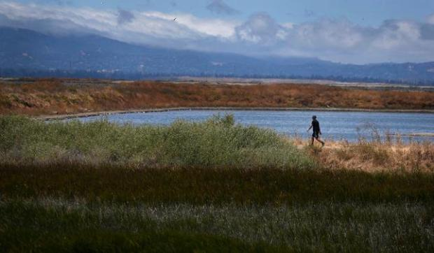 A hiker enjoys the views of wetlands at Alviso Marina County Park in Alviso, Calif., Wednesday, May 25, 2016.(Bay Area News Group)