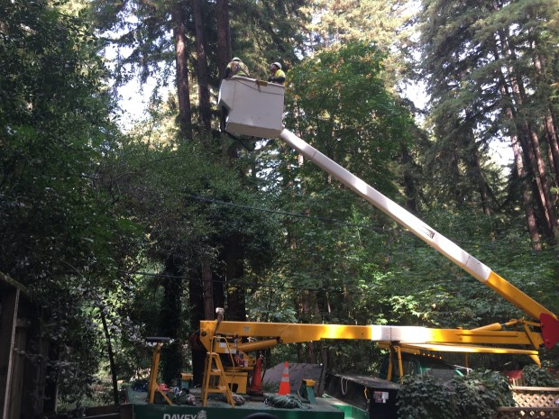 PG&E crews trim trees Thursday morning in Boulder Creek in preparation for the weekend storm (PG&E)
