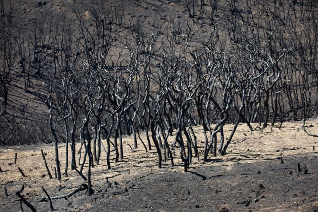 Burned trees and shrubs dot the hillsides as officials from the Santa Clara Valley Open Space Authority tour the site of the Loma Fire in the Santa Cruz Mountains near Los Gatos, Calif., Thursday, Oct. 20, 2016. The fire charred nearly 5,000 acres in southern Santa Clara County recently. Officials from the Santa Clara Valley Open Space Authority went to see the damage, including erosion from the Oct. 15-16 storms, which dumped nearly 10 inches of rain on the area. (Patrick Tehan/Bay Area News Group)