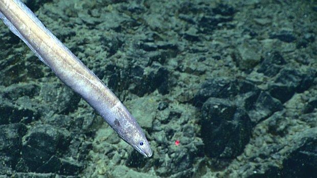 weird sea creatures new