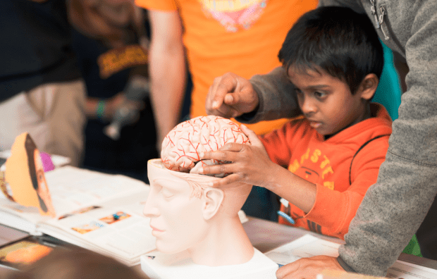Students learn about the human brain at Discovery Day, a science festival at AT&T Park on Nov. 8, 2016.