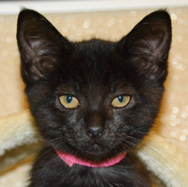 Candy is the Valley Humane Society's pet of the week.