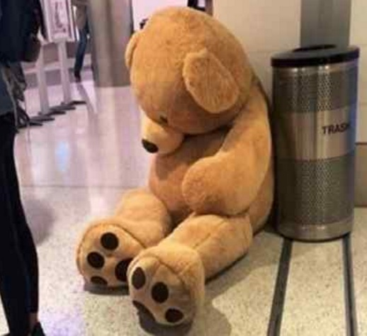 Brodie the bear at LAX. (Submitted photo)